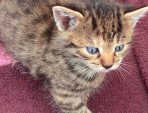 Katzenallergie: Juckreiz, Asthma  beim Kuscheln mit dem Stubentiger